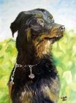 Krzyżówka Rottweilera zOwczarkiem